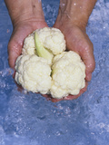 Cauliflower Being Washed (Brassica Oleracea) Photographic Print by Wally Eberhart