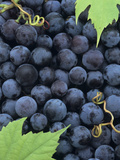 A Harvest of Juicy Concord Grapes Photographic Print by Wally Eberhart
