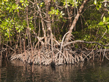 Mangroves of Misool, Raja Ampat, West Papua, Indonesia Photographic Print by Reinhard Dirscherl