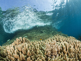 Fish Swimming and Waves Breaching on Reef, Pacific Ocean, Raja Ampat, West Papua, Indonesia Photographic Print by Reinhard Dirscherl