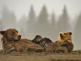 Brown Bear and Cub Resting (Ursus Arctos), Lake Clark National Park, Alaska, USA Photographic Print by Buff & Gerald Corsi