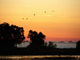 Snow Geese Flying (Chen Caerulescens), Colusa Wildlife Reserve, California Photographic Print by Buff & Gerald Corsi