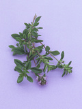 Thyme, a Popular Culinary Herb High in Vitamin K and Minerals Photographic Print by Wally Eberhart