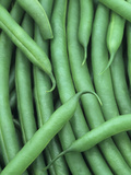 A Harvest of Blue Lake Green Beans (Phaseolus Vulgaris) Photographic Print by Wally Eberhart