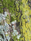 Lichen and Moss on Tree Bark Photographic Print by Jeff Daly
