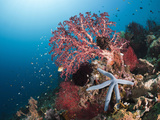 Coral Reef, Amed, Bali, Indonesia Photographic Print by Reinhard Dirscherl