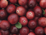 A Harvest of Colorful Cranberries (Vaccinium Macrocarpon) Photographic Print by Wally Eberhart