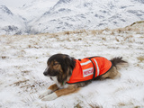 A Sarda or Search and Rescue Dog Association Dog Photographic Print by Ashley Cooper