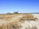 Sandy Shore of Otter Island, a Barrier Island Along the South Carolina Coast, USA Photographic Print by Marc Epstein