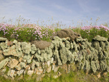 Drystone Wall on the Edge of Farm Field at Baggy Point in Devon, United Kingdom Photographic Print by Ashley Cooper