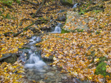 Small Stream with Fall Leaves, Malanaphy Springs State Preserve, Winneshiek County, Iowa, USA Photographic Print by Clint Farlinger