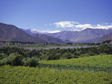 Vineyards in the Elqui Valley, Chile Photographic Print by Gary Cook