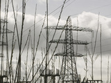 Willows Being Grown for Biofuel in Front of Electricity Pylons Near Penrith, United Kingdom Photographic Print by Ashley Cooper