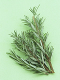 Rosemary, a Fragrant Culinary Herb Photographic Print by Wally Eberhart