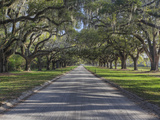 Driveway Beneath Stately Live Oak Trees Draped in Spanish Moss, Boone Hall Plantation Photographic Print by Adam Jones
