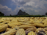 Corn Drying in the Mid-Day Sun, Yiling, Nanning, Guangxi, China Photographic Print by David Fleetham