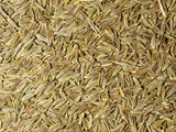 Whole Dried Cumin Seeds Used as a Spice or Herb (Cuminum Cyminum) Photographic Print by Ken Lucas