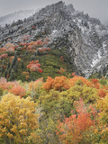 An Autumn Snowfall Decorates the Mountainsides and Trees of Little Cottonwood Canyon Photographic Print by Don Grall