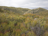Chaparral Vegetation at 4500 Feet in the Laguna Mountains, San Diego County, California, USA Photographic Print by Richard Herrmann