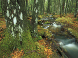 Stream Flowing Through Moss Covered Trees and Rocks Moss, Which Lack Roots Photographic Print by Chris Linder