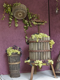 Grape Exhibit, La Festa Dell'Uva, Impruneta, Italy, Tuscany Photographic Print by Adam Jones
