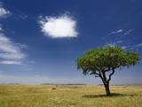 Sausage Tree (Kigelia Africana), Masai Mara Game Reserve, Kenya, Africa Photographic Print by Adam Jones
