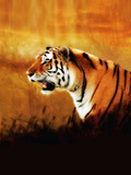 A Beautiful Siberian Tiger Seen in Profile Sitting Among Foliage in a Warm Evening Light Photographic Print by Victor Habbick