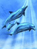 Illustration of Three Bottlenose Dolphins Swimming under the Ocean Photographic Print by Victor Habbick