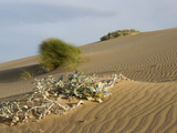 Sand Dunes Along the Coast Near Witsand East of Cape Town, South Africa Photographic Print by Tim Hauf
