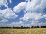 Wheat Field and Fair Weather Cumulus Clouds, Louisville, Kentucky Photographic Print by Adam Jones