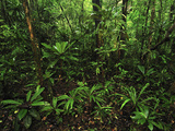 Tropical Rainforest, Masoala National Park, Madagascar Photographic Print by Thomas Marent