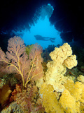Scuba Diver at the Entrance to Cavern Filled with Gorgonian and Alcyonarian Corals Photographic Print by David Fleetham