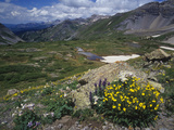 Alpine Mountian Summer Meadow with Wildflowers Photographic Print by Adam Jones
