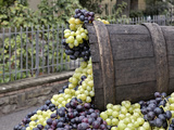 Grapes, La Festa Dell'Uva, Impruneta, Italy, Tuscany Photographic Print by Adam Jones