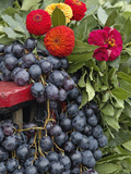 Grapes and Flowers, La Festa Dell'Uva, Impruneta, Italy, Tuscany Photographic Print by Adam Jones