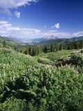 Two-Grooved Milkvetch Mountain Wildflower in a Meadow and View Toward Mt Crested Butte Photographic Print by Adam Jones