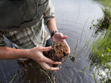 Undergraduate Student Examines a Mass of Sediment for Benthic Macro Invertebrates Photographic Print by Chris Linder