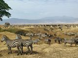 Mixed Herd of Burchell's Zebra (Equus Burchelli) and Blue Wildebeest (Connochaetes Taurinus) Photographic Print by Adam Jones