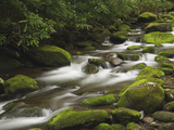 Mountain Stream Cascading over Moss Covered Boulders, Roaring Fork Motor Nature Trail Photographic Print by Adam Jones