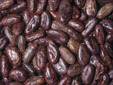 Raw, Whole Cacao Beans, the Source of Chocolate (Theobroma Cacao)Native to Tropical South America Photographic Print by Ken Lucas