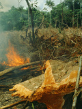 Slash-And-Burn Agriculture, Amazon Region, Acre, Brazil Photographic Print by Jacques Janqoux