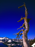 Dead Tree at Crater Lake, Crater Lake National Park, Oregon, USA Photographic Print by Paul Andrew Lawrence