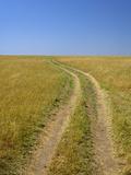 Road across Grass Plains, Masai Mara Game Reserve, Kenya, Africa Photographic Print by Adam Jones