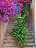 Bougainvillea Flowers, Philodendron, and Ferns on and around Building Steps, Crete, Greece Photographic Print by Adam Jones