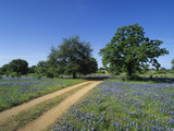 Dirt Road Through a Meadow of Flowering Texas Bluebonnets, Lupinus Texensis, Hill Country, Texas Photographic Print by Adam Jones