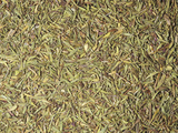Dried Thyme Leaves for Use as a Spice or Flavoring (Thymus Vulgaris) Photographic Print by Ken Lucas