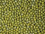Mung Beans (Phaseolus Aureus) Photographic Print by Ken Lucas