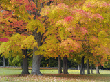 Maple Trees in Autumn Colors, Near Concord, Massachusetts Photographic Print by Adam Jones