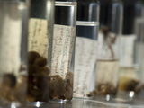 Sample Vials with Specimens of Benthic Invertebrates from Siberian Aquatic Ecosystems Photographic Print by Chris Linder
