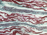 Cardiac Muscle Showing Purkinje Fibers in a Bundle of His, Longitudinal Section, LM X80 Photographic Print by Ralph Hutchings